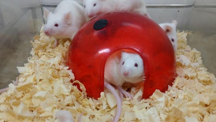 Animais do Biotério Central